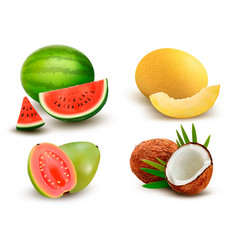 collection of fruit and berries watermelon vector image