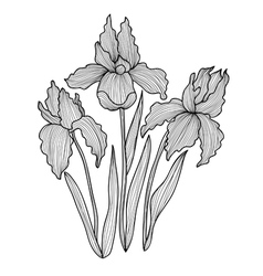 Decorative iris flowers vector