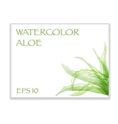 Aloe in corner vector