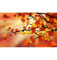 Bright colorful leaves on the branches vector