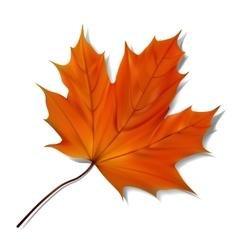 Orange maple leaf vector image vector image