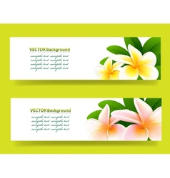 bannner with frangipani floral background vector image vector image