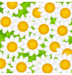 Camomile daisy background vector