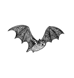 Bat engraving style vector