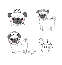 Cute pugs dogs vector