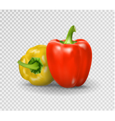 Set of two peppers yellow red pepper vector