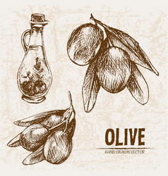 digital detailed line art olive vector image vector image