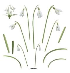 Set of snowdrop flowers elements vector