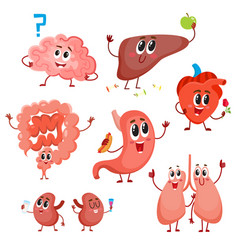Cute and funny healthy human organ characters vector