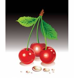 Sweet cherries vector