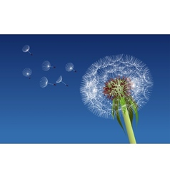 Dandelion seeds blown in the blue sky vector image vector image