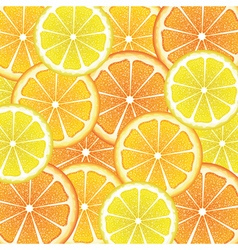Various Citrus Slices6 vector image vector image