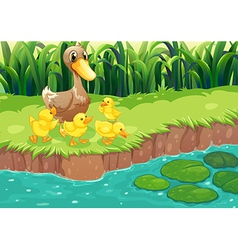A mother duck with her ducklings at the river vector image