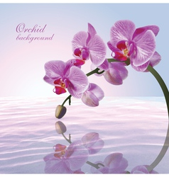 Beautiful background with orchid vector