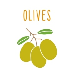 Olives isolated on white vector