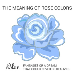 Blue rose infographics vector image