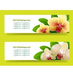 banner with orchids floral background vector image vector image