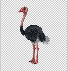 ostrich on transparent background vector image vector image