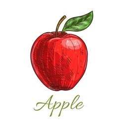 Fresh red apple fruit with leaf sketch vector