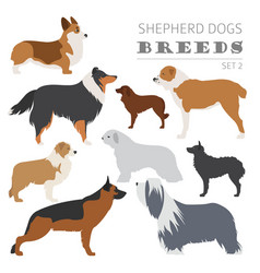 Shepherd dog breeds sheepdogs collection isolated vector