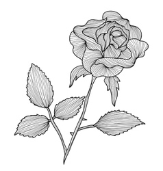Decorative rose vector