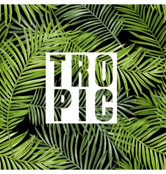 Tropical palm tropical leaves background vector