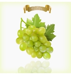 Bunch of yellow or green grapes with vine leaves vector