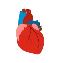 Human heart icon vector