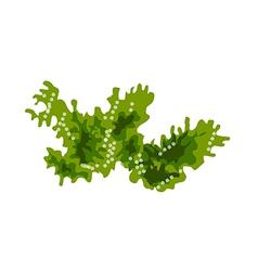 icon sea weed vector image