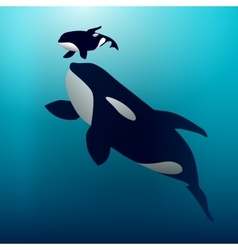 Orca whale vector image vector image
