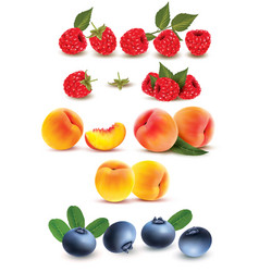 Collection of fruit and berries raspberry peach vector