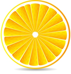 Orange segment isolated on a white vector