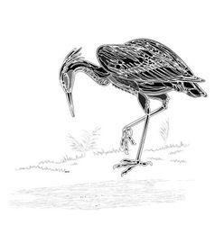 Heron bird vintage engraving vector