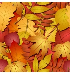 seamless with autumn leaves vector image vector image
