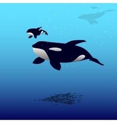 Orca whale vector