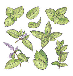 different colored of herbal vector image