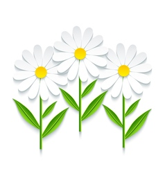 3d chamomile isolated on white background vector image