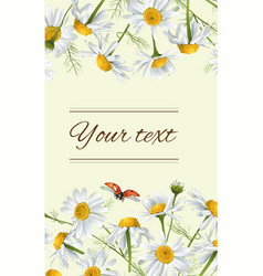 Chamomile flowers banner vector image vector image