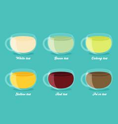 Tea types infographics tea drinks guide in flat vector