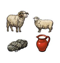 Sketch ram cutted wool sheep milk jug vector