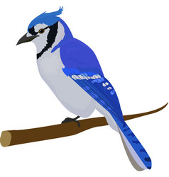 Blue jay bird isolated on white background vector
