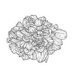 Flower ink sketch isolated on white background vector