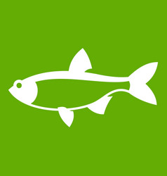 rudd fish icon green vector image