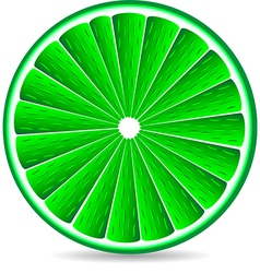 Slice of a lime fruit vector