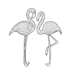 Flamingo coloring book for adults vector