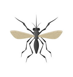 mosquito icon isolated on white background vector image