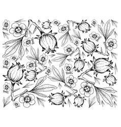Hand drawn of hibiscus sabdariffa or roselle backg vector