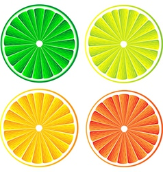 lemon lime orange and red grapefruit vector image