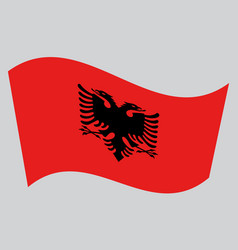 flag of albania waving on gray background vector image