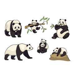 Set of pandas in cartoon style vector